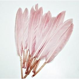 Pluma rosa empolvado