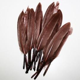 Pluma marrón