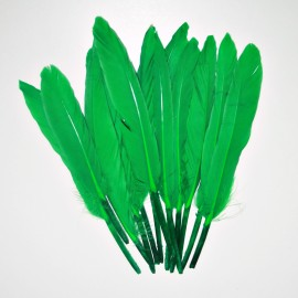Pluma verde